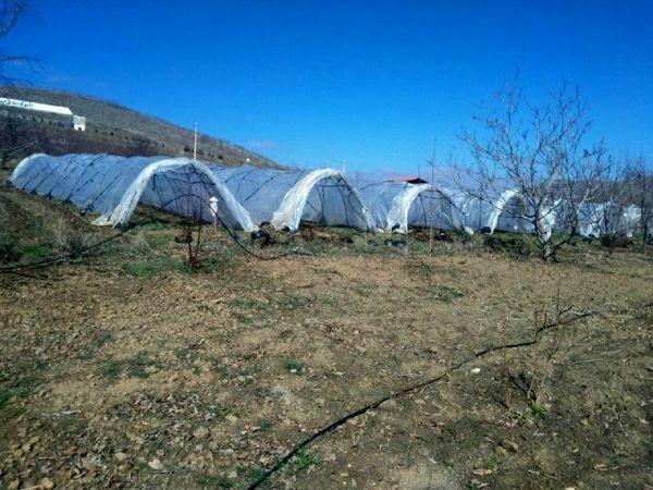 تونل پلاستیکی عملکرد محصول توت فرنگی را تا ۷۰ درصد افزایش میدهد