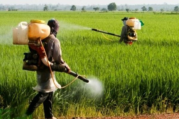 طعمه سموم تا ده روز آینده در اختیار کشاورزان قرار میگیرد