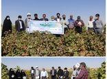 برگزاری روز مزرعه و بازدید از سایت جامع الگویی تولیدی، ترویجی پنبه سرایان
