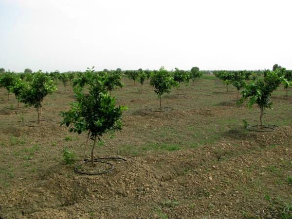 40 هزار مترمربع از باغ های عباس آباد به سیستم نوین آبیاری تجهیز شد