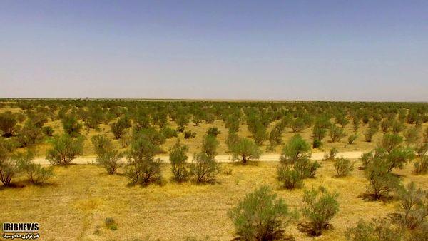 اجرای 11 طرح مطالعاتی باهدف مهار بیابانها در خراسان شمالی