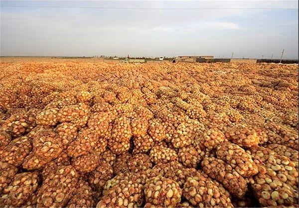 خرید توافقی ۱۳۰ تن محصول پیاز منطقه جنوب کرمان