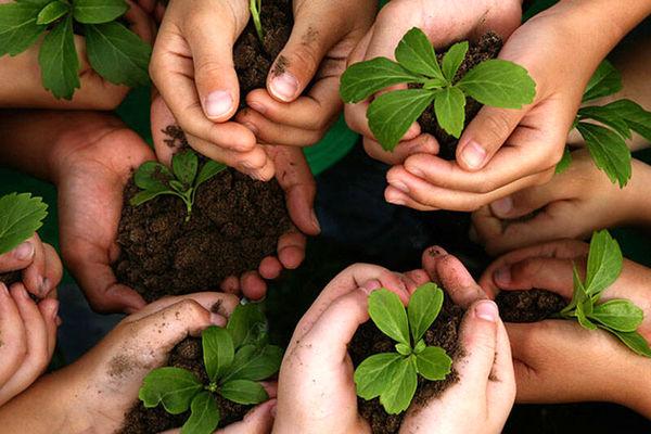 130 تشکل عضو صندوق حمایت از توسعه بخش کشاورزی استان همدان