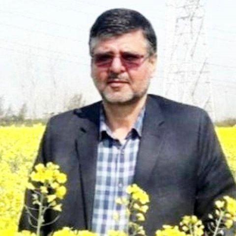 آخرین وضعیت کشت کلزا در استان گلستان