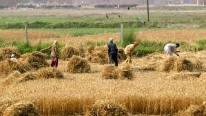 به جای هزینههای کشاورزی، درآمد کشاورزان بیمه شود