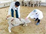 خشکسالی در خراسان شمالی بیماری مشترک بین انسان و دام را افزایش داد