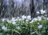 بارندگیهای بهاری کار سپاه نبود