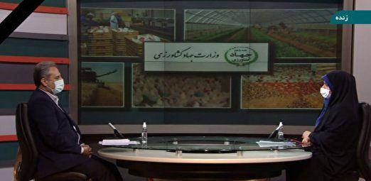 کاهش 3.5 میلیون تنی واردات ذرت با اجرای طرح تامین خوراک دام و دانههای روغنی در داخل