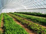 ۵۵ پروژه کشاورزی در استان بوشهر آماده بهرهبرداری است