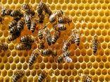 پیش بینی تولید ۷ هزار تن عسل در زنبورستانهای کرمانشاه