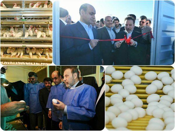 افتتاح فاز اول زنجیره تولید تخم مرغ شرکت کاسپین طلایی چیکا در گنبدکاووس