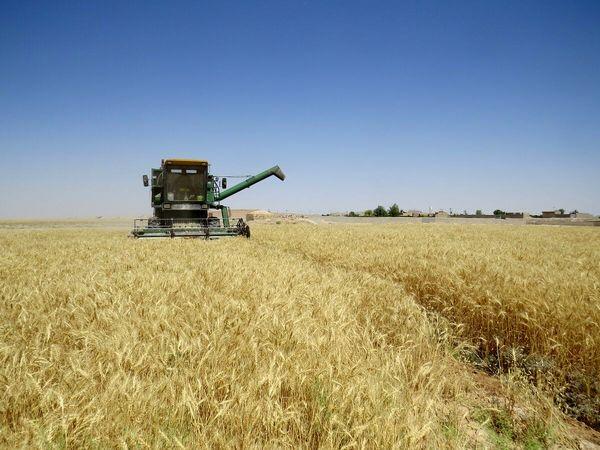 جهش ۵۰ درصدی تولید محصولات باغی و زراعی یزد