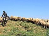 واگذاری مدیریت ۱۷ هزار و ۵۳۱ هکتار مراتع خراسان شمالی به بهرهبرداران