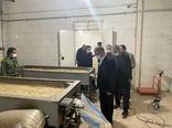افتتاح مجهزترین واحد فرآوری تخمه های آجیلی در خوی
