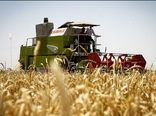 رشد ۱۱ درصدی توزیع بذر «جو» در سال جاری