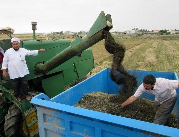 یک هزار و ۸۵۰ تن کلزا بصورت تضمینی از کشاورزان قزوینی خریداری شد