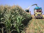 آغاز برداشت ذرت علوفهای از ۲۴ هزار هکتار از مزارع کشاورزی استان قزوین