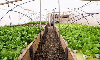 افزایش سطح گلخانههای کرمانشاه به 300 هکتار در دستور کار است