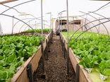 توسعه و بهرهبرداری  4600هکتار گلخانه در سال جهش تولید