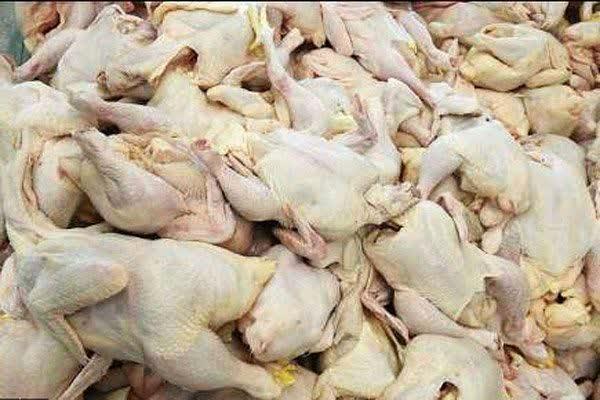 افزایش 37 درصدی تولید گوشت مرغ در استان چهارمحال و بختیاری