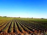 افزایش قیمت؛ مصرف کود فسفاته و پتاسه را در مزارع خراسان شمالی کاهش داد