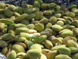تولید بالغ بر 6 هزار تن بادام از سطح باغات خراسان جنوبی