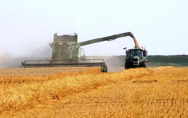 برداشت جو و کلزا از مزارع کشاورزی تاکستان آغاز شد