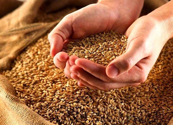 خودکفایی محصولات کشاورزی در گرو استفاده از بذر سالم