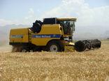 140 هزار تن جو از مزارع کشاورزی استان قزوین برداشت شد