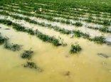 بیمه محصولات کشاورزان، راهکار جبران خسارتها