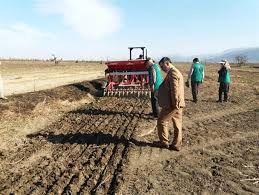 کشت بیش از 150 هکتار گندم به روش کشت مستقیم در شهرستان نمین