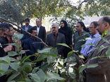 طرح اصلاح و نوسازی باغات درجه 2 در شهرستان تبریز اجرا می شود