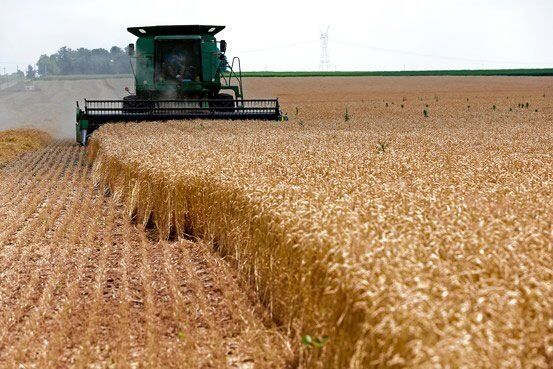 آغاز برداشت غلات از مزارع فراشبند