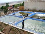 تجاریسازی تولید غذای زنده آبزیان در استخرهای خاکی