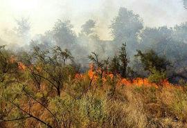 کاهش 36 درصدی حریق در جنگل ها و مراتع کشور