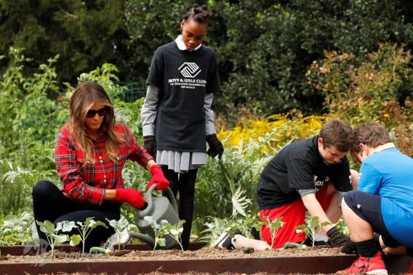 باغبانی ملانیا ترامپ/ تصاویر