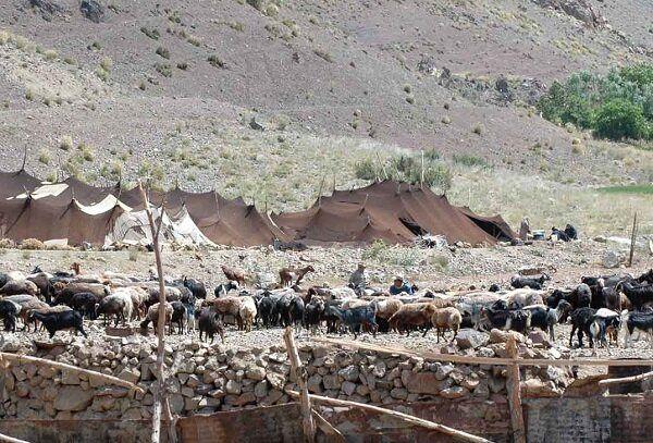تولید سالانه ۸۳۰۰ تن گوشت توسط عشایر ایلام