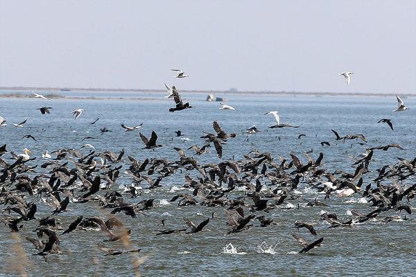 پیشبینی افزایش مهاجرت پرندگان به هورالعظیم