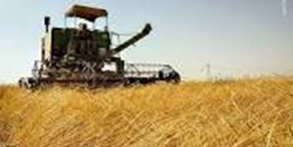 پیشبینی برداشت ۱۸۰ هزار تن گندم در قروه