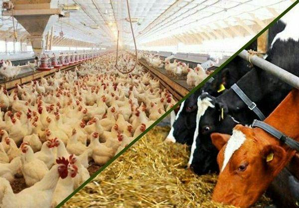 خرید ۸۰ هزارتن انواع محصولات و نهاده های کشاورزی