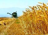 خریداری ۲ هزار و ۱۹۴ تن گندم مازاد کشاورزان طبس