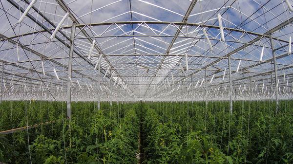 41 درصد انرژی مصرفی در کشاورزی به وسیله برق