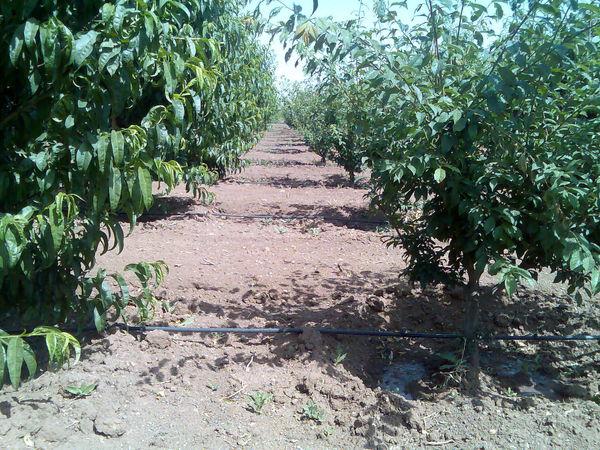 توزیع بیش از 29 هزار تن انواع کودهای شیمیایی توسط شبکه تعاون روستایی استان قزوین