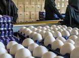اصفهان با مازاد تولید مرغ، تخممرغ و شیر مواجه است
