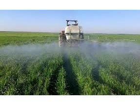 مبارزه شیمیایی در 880 هکتار از مزارع گندم میاندورود
