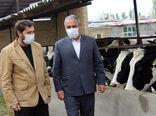 تولید سالانه 36 هزار تن شیر در شهرستان مرند