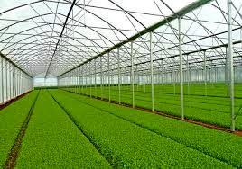 اختصاص ۳۵ میلیارد ریال برای تکمیل زنجیره کشاورزی خراسان شمالی