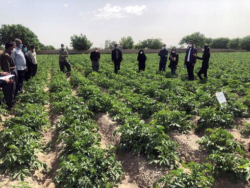 برگزاری 33 دوره آموزشی ترویجی کشاورزی در اردیبهشت ماه سال جاری در شهرستان بناب