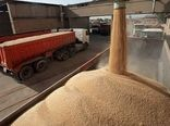 خرید  گندم در چهارمحال و بختیاری به مرز ۳۶ هزار تن رسید