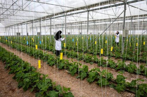 توسعه شهرکهای کشاورزی، رویکرد جدید در حوزه کشاورزی است